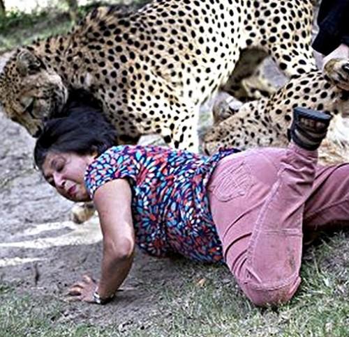 ghepardi-2.jpg
